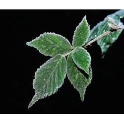 Защита плодовых насаждений от весенних заморозков